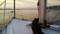 Watching the sunset with Ziggy while at anchor in Portimao - 1