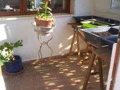 Seeds trays: broccoli, cauliflower, turnip, lettuce, cabbage, onions, spring onions. And sweet potato plant on the floor