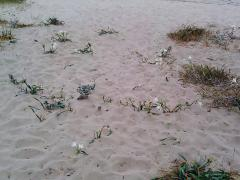 Flowers in the sand!